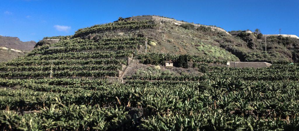 Banana Plantation - La Palma